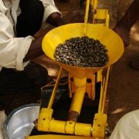 Jatropha seed oil press.
