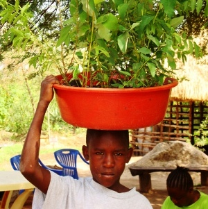 Boy with bucket of trees seedlings on his head.