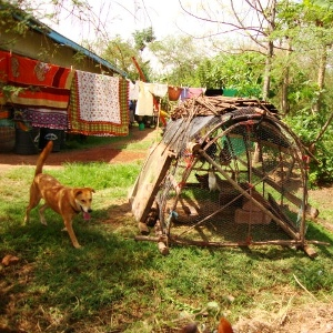 Dog, chickens and laundry on line at Kinesi Village Permaculture plot.